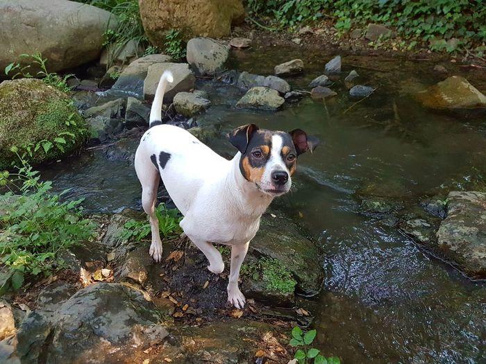 Posado perruno. Dog Domestic Animals Animal Themes One Animal