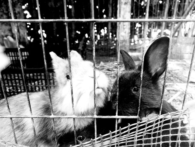 Animal Themes Domestic Animals Nature Black And White Photography Summercamp2017