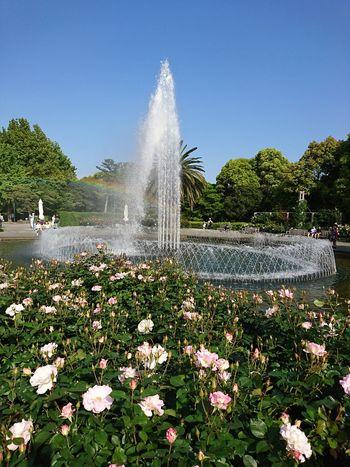 Irrigation Equipment Flower Water Spraying Pixelated Splashing Droplet Tornado Motion Poppy Drop