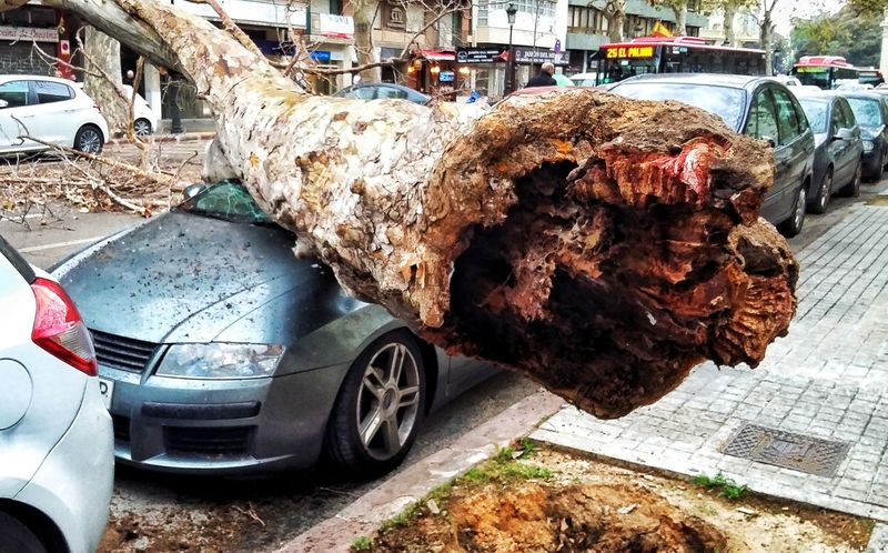 Accident Accidents And Disasters Tree Valencia, Spain Car Land Vehicle Transportation Mode Of Transport No People Close-up Outdoors Day