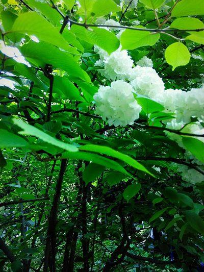 Flowers,Plants & Garden Trip Photo Taking Photos滁州琅琊山