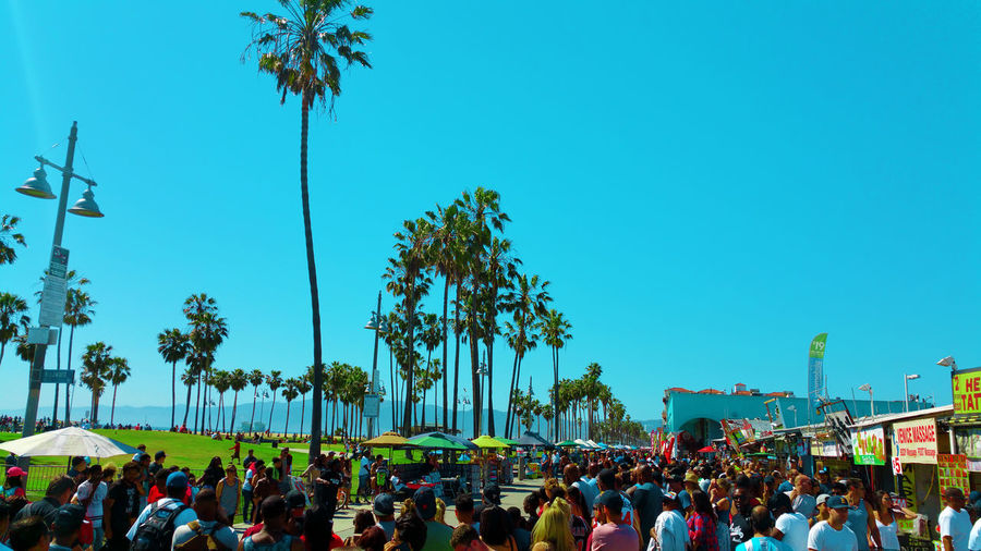 Group of people by palm trees against clear blue sky
