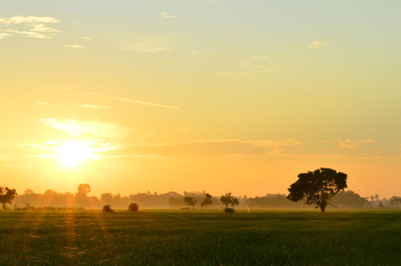 fog sunrise rice fields in Palembang. January Indonesia 2019 Sky Tranquil Scene Beauty In Nature Scenics - Nature Landscape Environment Tranquility Sunset Field Plant Land Sun Grass Cloud - Sky Tree Sunlight Nature Orange Color Rural Scene Non-urban Scene No People Outdoors Lens Flare Bright