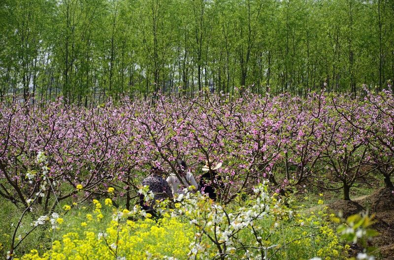 Nature's Diversities OpenEdit Trees Tree Flowers Flower Lost In The Landscape