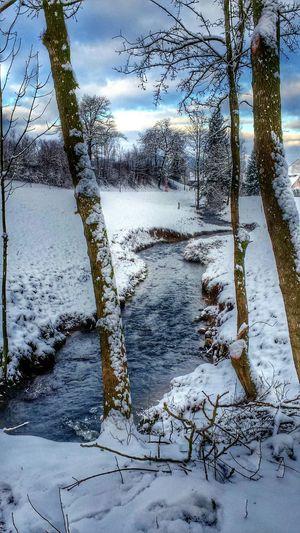 EyeEm Nature Lover Winter Trees Winter2014