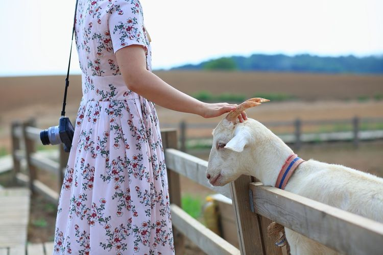 Midsection of woman touching goat