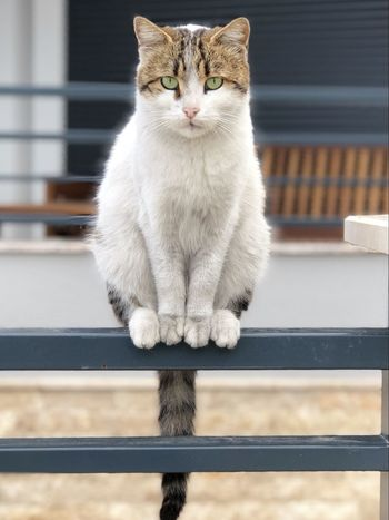 Animal Themes Day Domestic Animals Domestic Cat Feline Indoors  Looking At Camera Mammal No People One Animal Pets Portrait Railing Sitting
