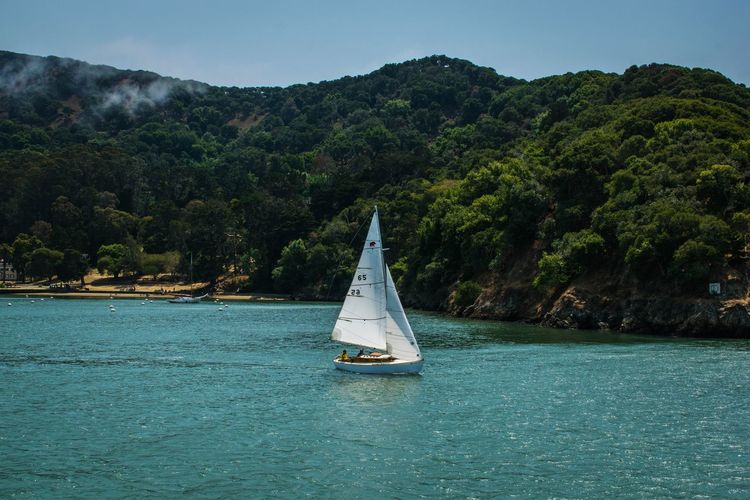 On the way to Angel Island Angel Island Tiburon  Water Tree Sailing Nautical Vessel Mountain Sea Sailboat Adventure Blue Sky Sailing Ship