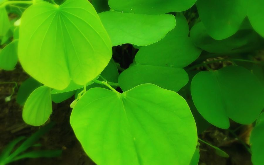 Beautiful green leaves Green Color Beauty In Nature Plant Nature Leaf Freshness Day