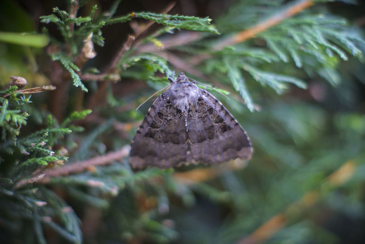 Beauty In Nature Close-up Conifer  Day Green Color Growth Moth Nature Plant Scenics Tranquility