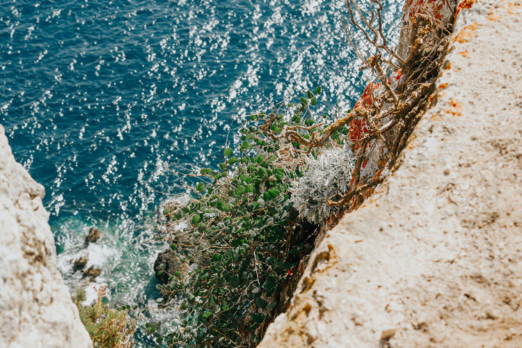 Nature High Angle View Plants Cliff Rock Rock Formation Rocky Coastline Rocks And Water Water Sea Beach Close-up Eroded Geology Stone Physical Geography Canyon Arid Coast