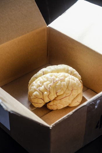 Human brain in
