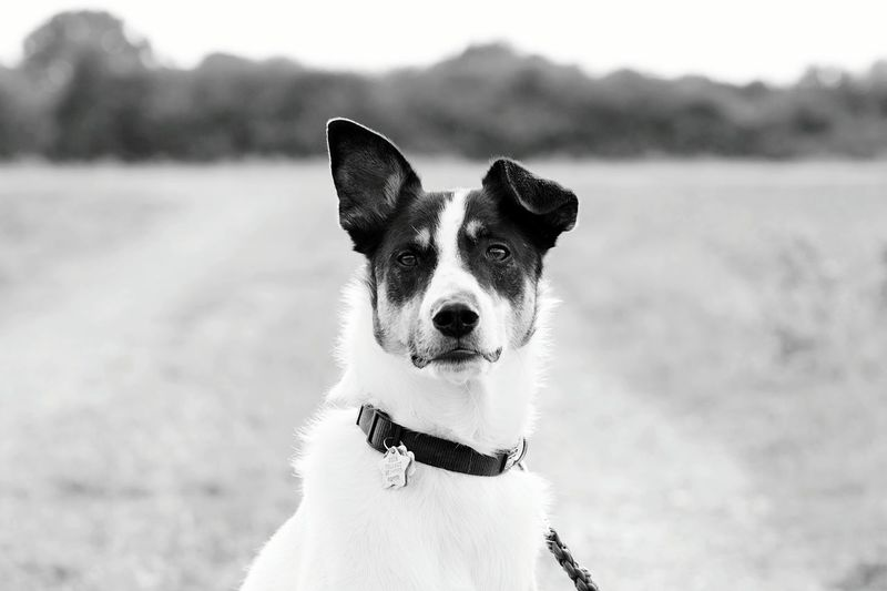 Dog Dog Love Dogs Check This Out Enjoying Life Hanging Out Taking Photos Cheese! Likeforlike Hund Photoshooting Germany Nature Animal Animals First Eyeem Photo Focus Tiere Tier Cologne Spiegelreflexkamera Anfänger Deutschland Blackandwhite Blackandwhite Photography