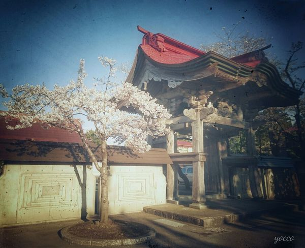 Spring Flowers Japan Photography Sky Hellow World Cherry Blossoms Eyeem Photography Check This Out Japan サクラ Flower Japan Culture Japanese History Cherry Tree 郷愁 Nostalgic  桜 花見 寺院 Temple EyeEm Gallery