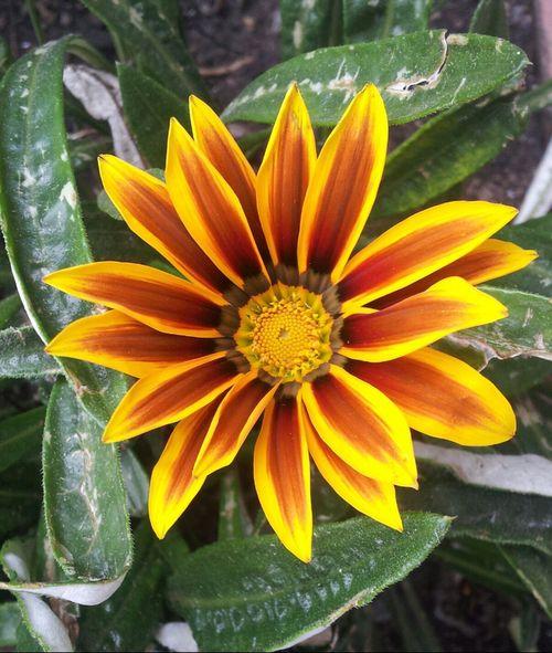 Hermosas flores en bogota. Hi! Nature Bogota. Flores
