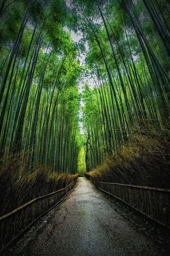 Memories of Japan - 27/10/17, Arashiyama Forest, Kyoto. EyeEm Masterclass Canon ASIA Kyoto Japan Travel Travel Destinations Path Full Frame Lines EyeEm Nature Lover Tree Growth Outdoors Scenics No People Tranquility Day