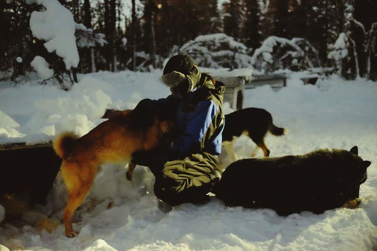 Person Kneeling With Dogs On Snow Covered Field