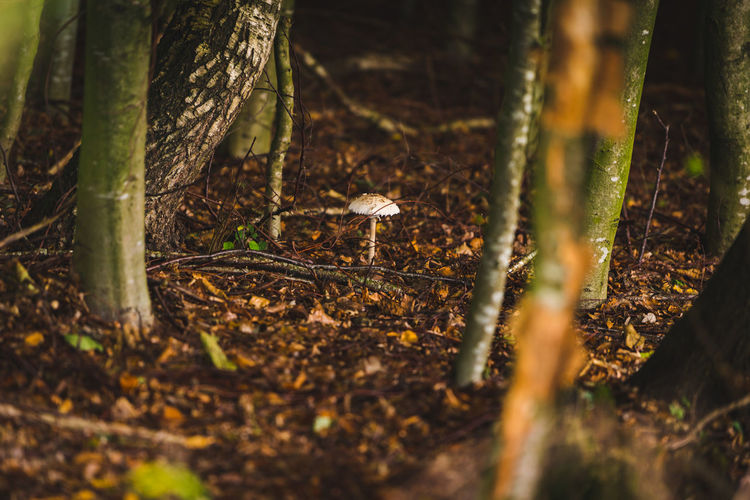 Mushroom in the woods Tree Plant Land Selective Focus Nature Trunk Forest Tree Trunk Animal Themes No People Animal Day Animal Wildlife One Animal Animals In The Wild Field Growth Vertebrate Bird Outdoors
