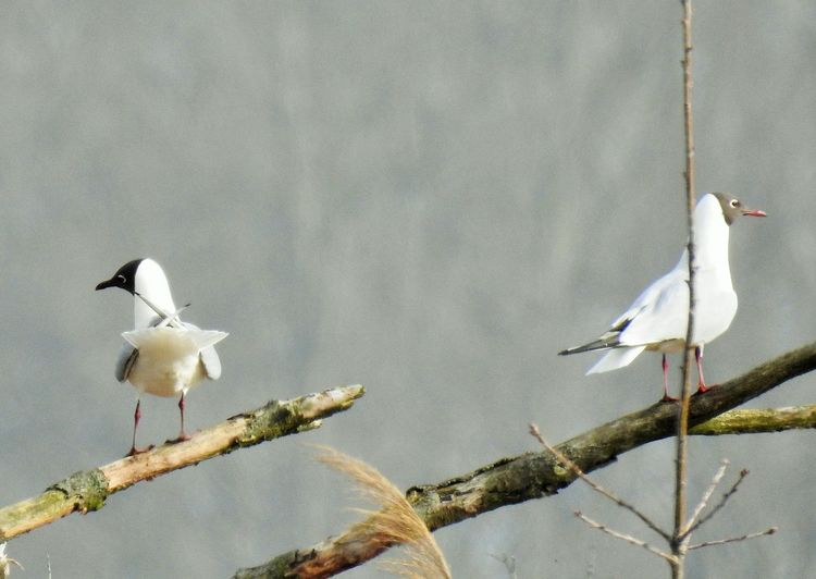 Annäherung.... Bird Vertebrate Animals In The Wild Animal Themes Animal Animal Wildlife Group Of Animals Perching No People Nature Day Focus On Foreground Branch Tree Two Animals White Color Outdoors Plant Water Birds_collection Naturelovers