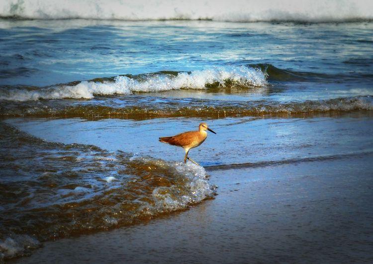Beach Ixtapa Birds Playa Your Magazine Ixtapa Zihuatanejo Enjoying Life Relaxing Hello World