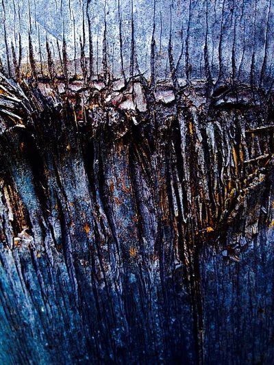 Palm Bark Palm Palm Bark Textures Texture Your Design Story Fine Art Photography Maximum Closeness