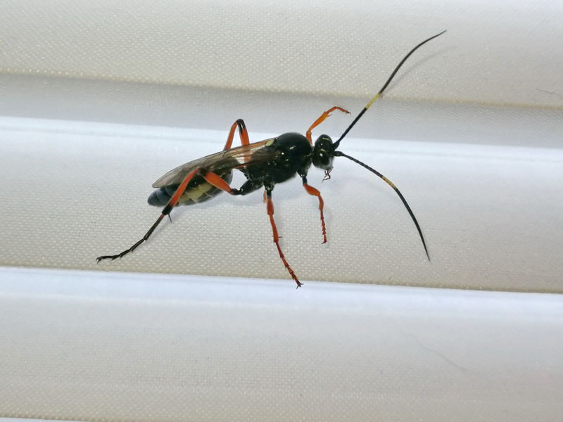 Animal Themes Ant Close-up Day Indoors  Insect Jalousie Window No People One Animal