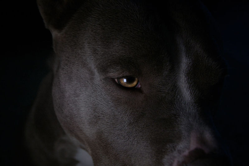 Close-up portrait of dog in darkroom