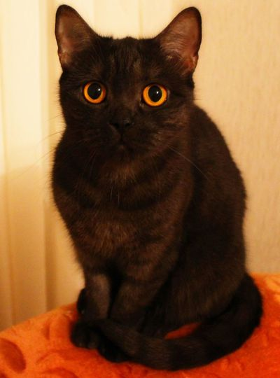 Cat Mycat Blakcat Black Cats Orangeeye
