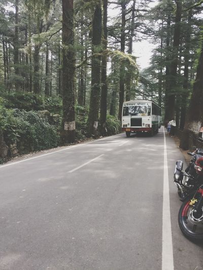 Cars on road in forest