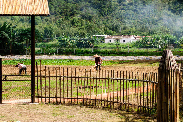 Rear view of people walking on agricultural field