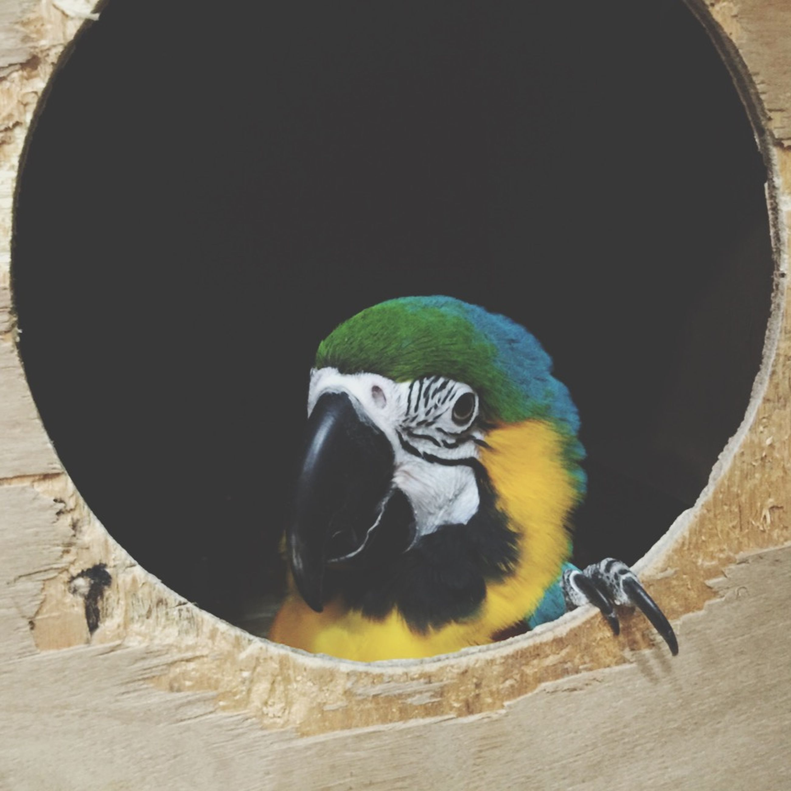 bird, animal themes, creativity, art, indoors, high angle view, art and craft, close-up, animal representation, circle, animals in the wild, no people, wildlife, still life, one animal, day, table, directly above, nature