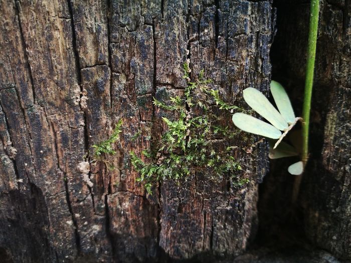 Close-up of plant against tree trunk