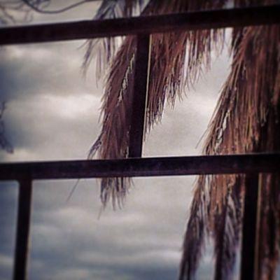 بتصويري بعدستي كانون هاشتاق_صور غرد_بصوره فوتو_العرب فوتوغرافي فلو قهوة صورة طبيعة جمال مساء من_تصويري لايك ابداعي الشمس المصورون_العرب الناس_الرائيه السعودية