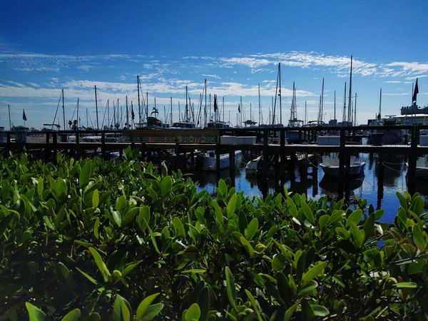 Enjoying Life Found On The Roll Relaxing Taking Photos Boats Boats⛵️ Florida Plants Perspective