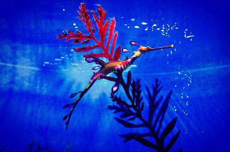 🐡 햄아 해마 해운대 아쿠아리움 부산아쿠아리움 Sealife Haeundae Aquarium Busan Pusan 海馬 Seahorse Followme Photographer 빈카메라 Bincamera