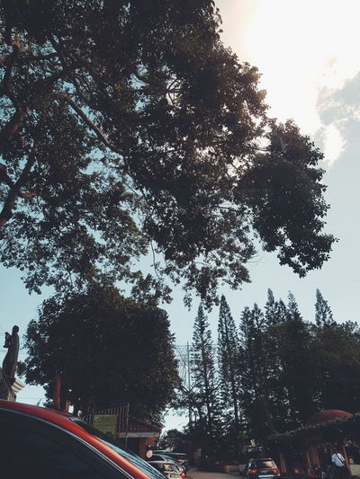Low angle view of trees against sky in city