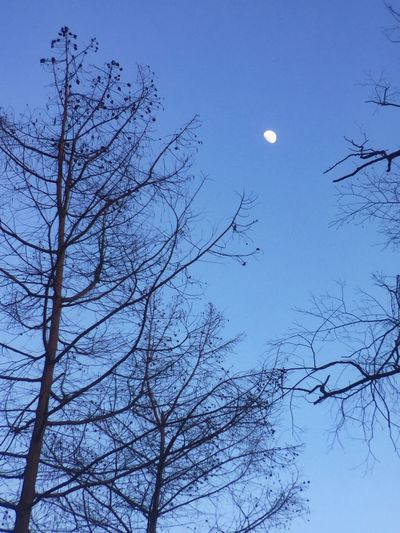 Moon Low Angle View Bare Tree Tree Branch Sky Nature Full Moon Beauty In Nature No People Outdoors Half Moon Clear Sky Tranquility Scenics Planetary Moon Astronomy Moon Surface Day Solar Eclipse