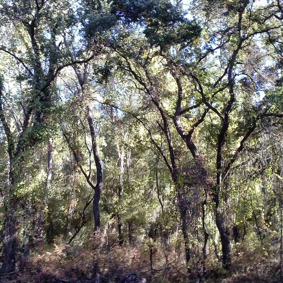 Eyeemphotography Eyeemphoto Phoneography Tree Trees Outdoors Scenic Anderson Marsh Grove Lake County, Ca