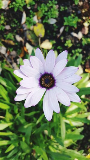 Flower Fragility Petal Beauty In Nature Flower Head Nature Day No People Plant Outdoors Close-up Growth Freshness Full Length Growth Nature Plant Beauty In Nature Purple
