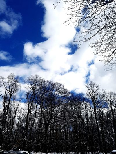 Bare Branches Sky Cloud - Sky