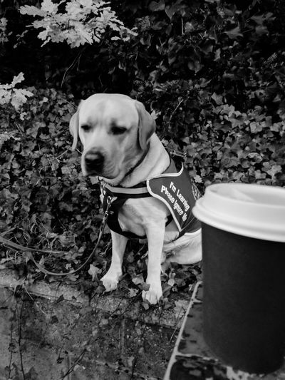 EyeEm Selects Dog Pets One Animal Domestic Animals Animal Themes Outdoors Day Mammal No People Coffee Assistance Dog Tea