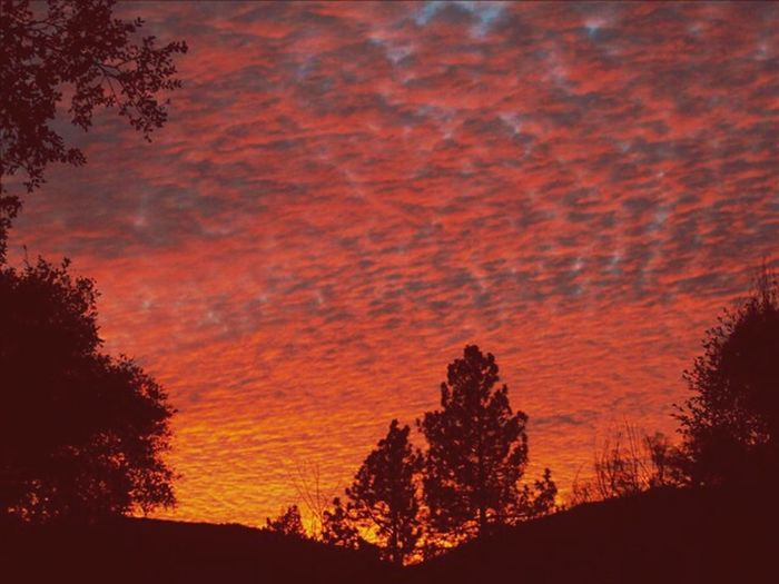 Tree Sunset Red Silhouette Sky Landscape Pine Tree Dramatic Sky Romantic Sky Moody Sky