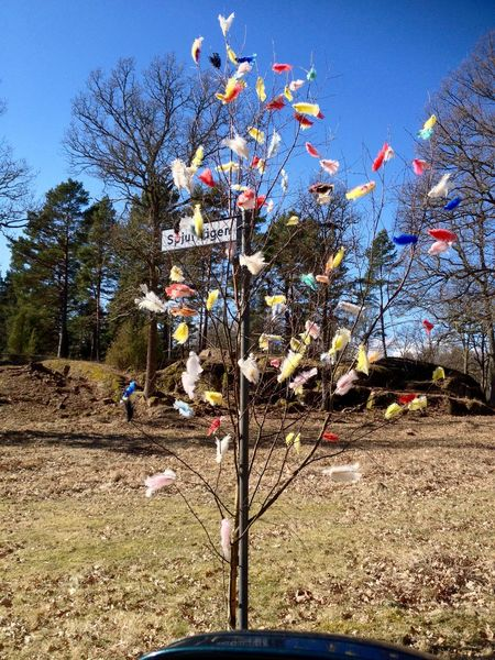 Eastertree in Småland Easter Easter Ready Easter Tree Feathers Oskarshamn Sweden Beauty In Nature Flower Outdoors Plant Småland Springtime Tree