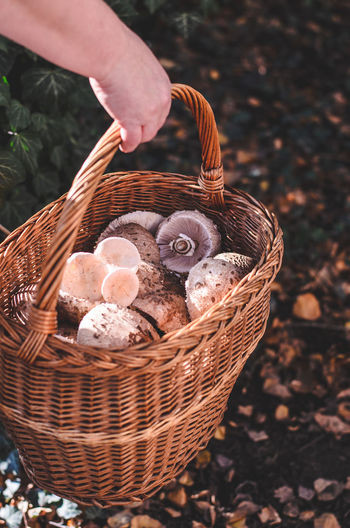 Cropped hand with harvested mushrooms in basket