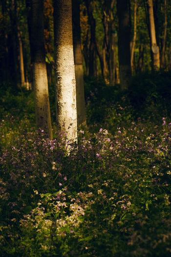 冬夏不出门,春秋入园林,但得花开放,哪少看花人。 spring Forest Tree Tree Trunk Beauty In Nature Flower No People Sunlight Sunshine