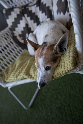 High angle view of dog resting at home