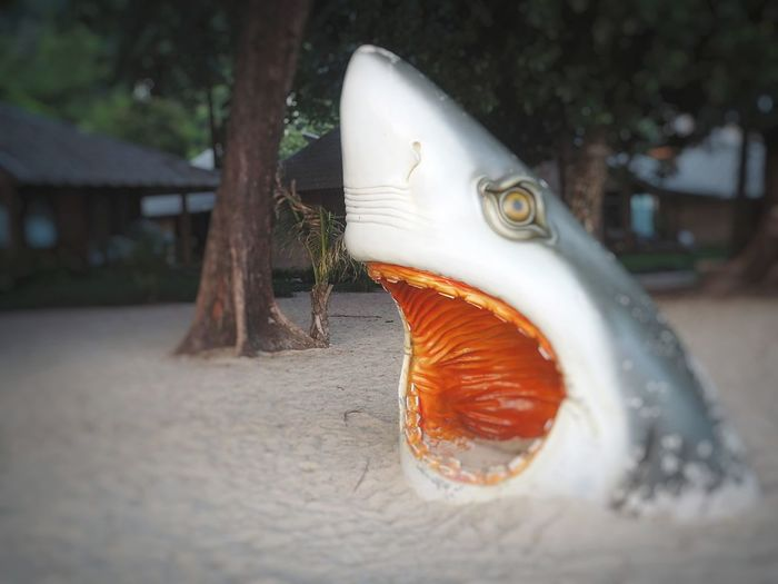 Toothless shark on the beach. HelloEyeEm Thailand Tree TRVEL Outside Beachlife Shark Tooth Toothless Vertebrate Fish One Animal Animal Eye Animal Wildlife Eye Animals In The Wild Animal Body Part Sea Nature Close-up Water Saltwater Fish No People Orange Color Outdoors Animal Mouth