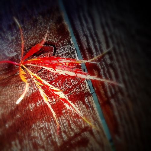 Showcase: December Autumn Autumn Colors Autumn Leaves Autumn Collection Colors Of Autumn Autumn 2015 Fall Beauty Fall Colors EyeEm Best Shots - Autumn / Fall Tulsa,oklahoma Tulsa, Oklahoma Tulsa Oklahoma My Oklahoma Oklahoma Nature Oklahoma Autumn Fall Season Fallen Leaves Fallcolors Fall2015