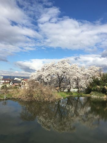 Cherry blossom Sky Lake