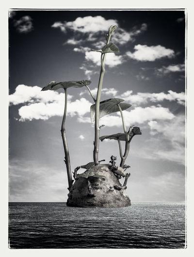 Potato Black And White Clouds Sea Sky Studio Shot